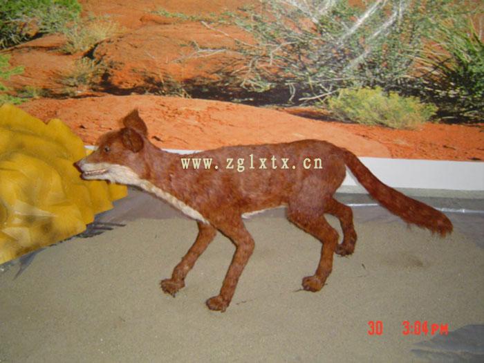 仿真沙漠狐