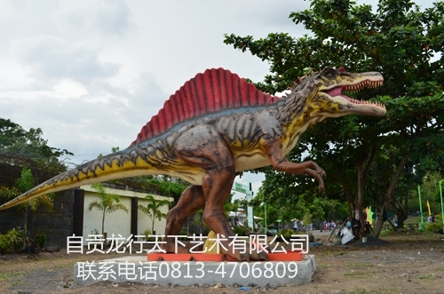 台湾菲律宾阿尔拜帆棘龙