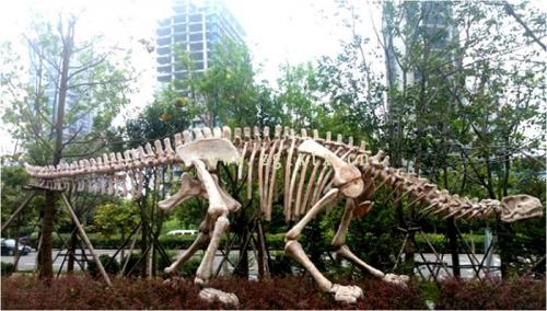 台湾恐龙化石