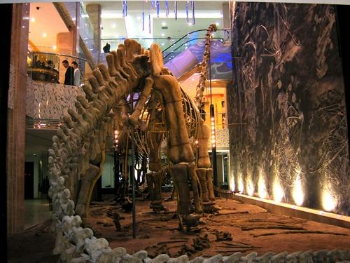 峨眉龙化石