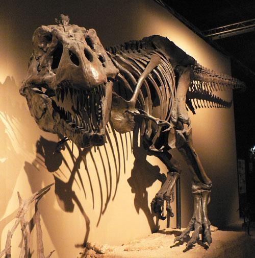 浙江霸王龙化石